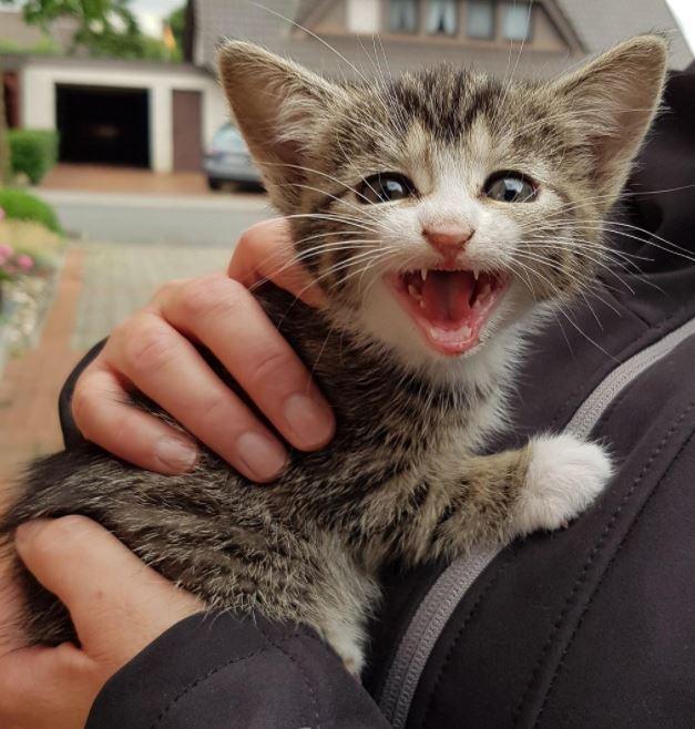 roaring kitten 3