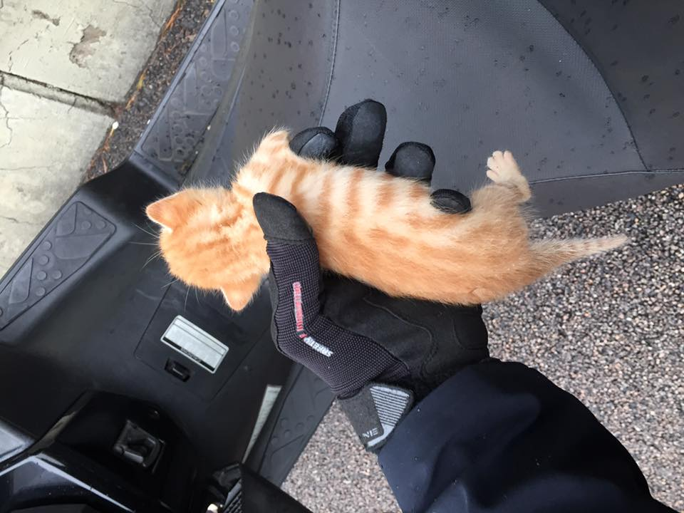 lion the kitten in bikers hand