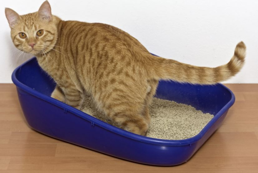 litter box helps cat find home