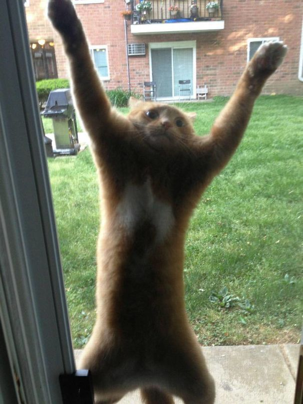 cats vs screen doors 2