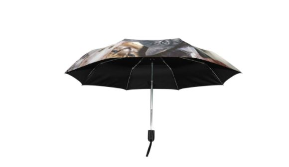 cat umbrella 2