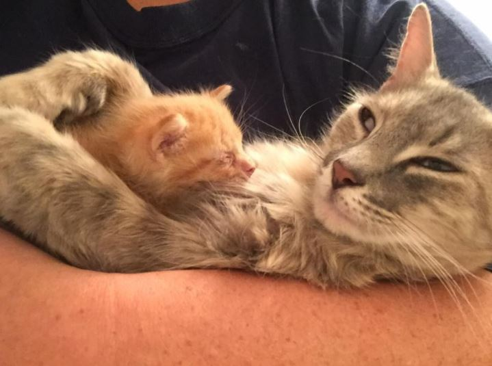 grieving mother cat with orphaned kitten