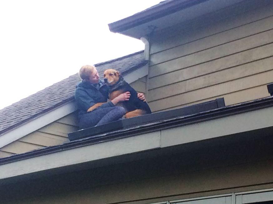 dog stuck on roof