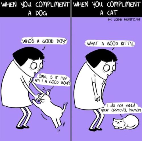 relatable cat comic dog vs cat