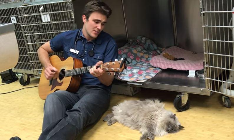 vet sings to cat