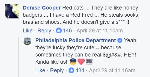 police cat facebook comments 2