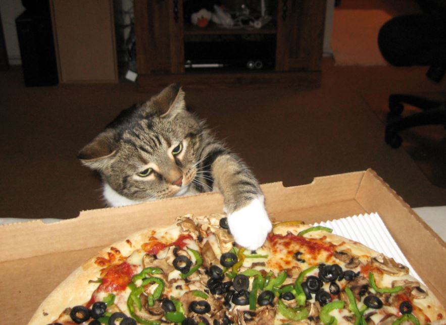 cat on pizza 10