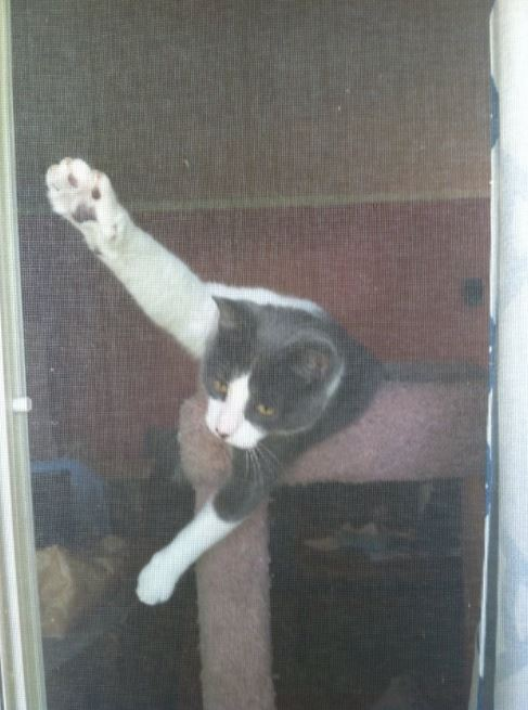 cats vs screen doors 11