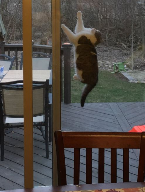 cats vs screen doors 8