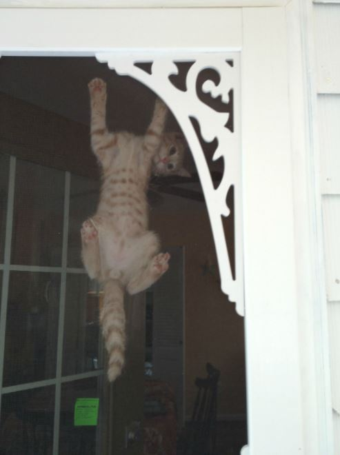 cats vs screen doors 10