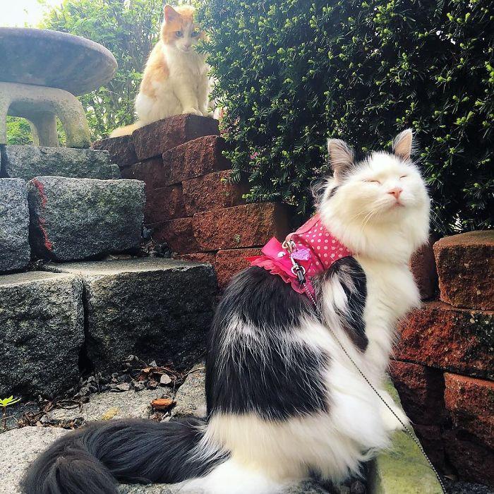 scottie admiring sophie the cat