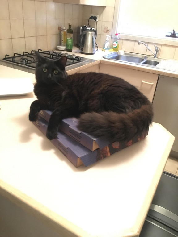 cat on pizza 14