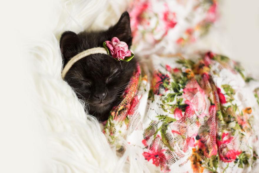 kitten baby photo shoot 3