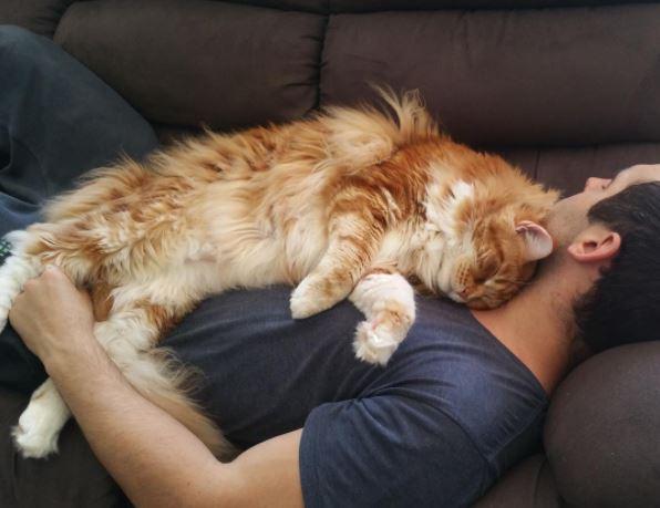 worlds longest cat 6