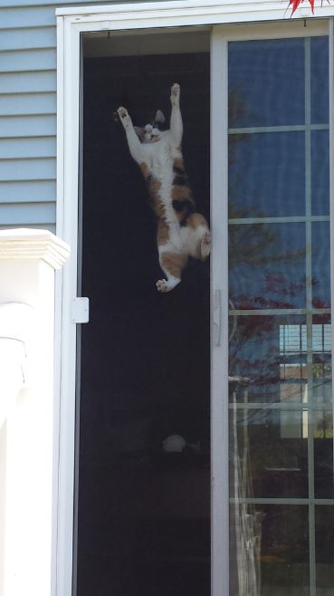 cats vs screen doors 1