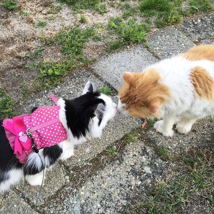 scottie giving sophie a kiss