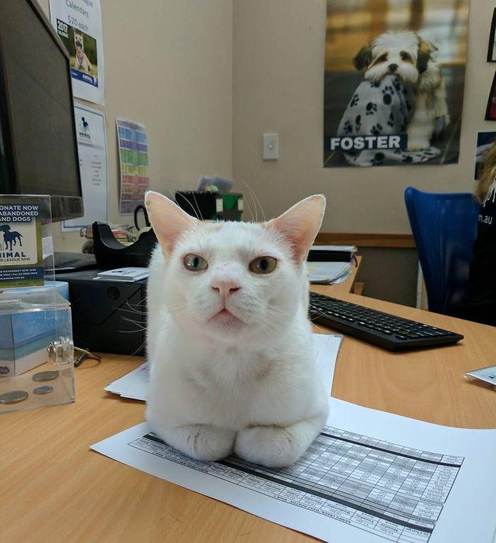 champas the shelter cat front desk