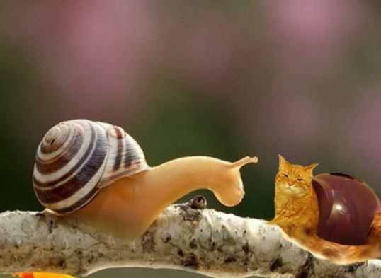 snail cat 5