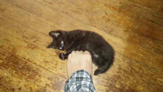 cats progression into foot murdering 5