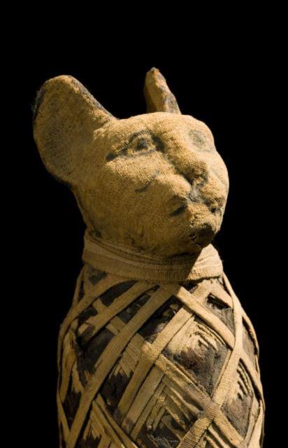 Egyptian cat mummy