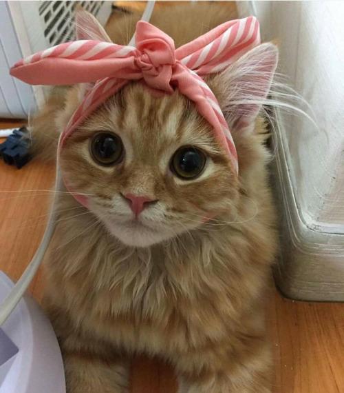 happy cat friday 3