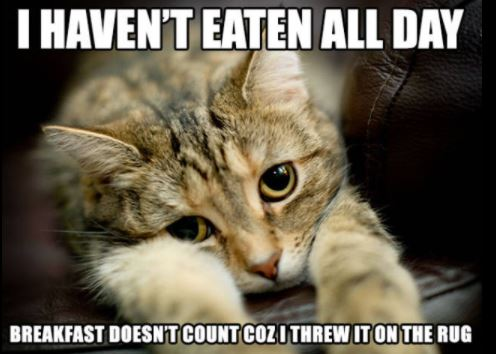 first world cat problems 23