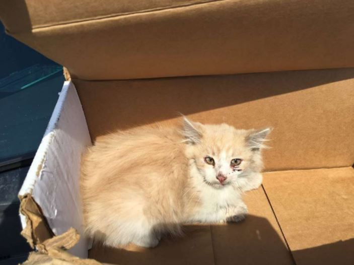 kitten rescued off golden gate bridge 3