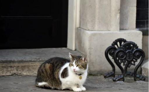larry london cat guards number 10