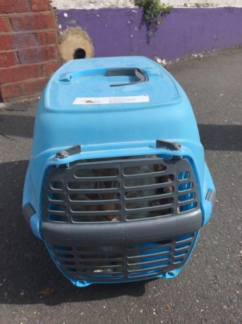 cat found alone in street cat rescue 2