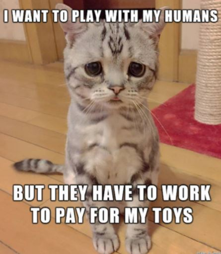 first world cat problems 30