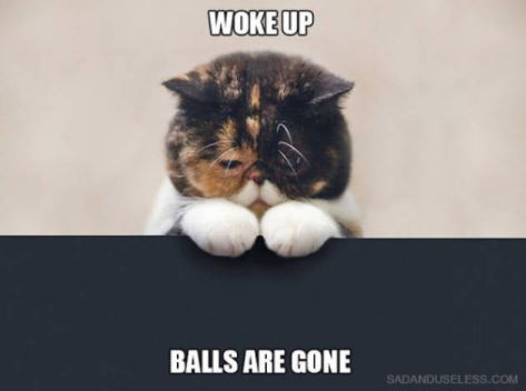 first world cat problems 13