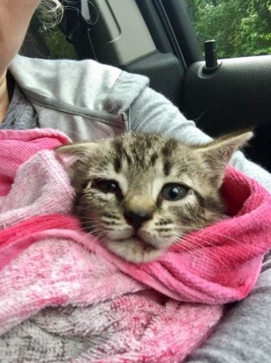 traffic kitten gets rescued highway rescuer gets ticket 2