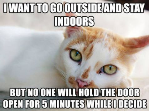 first world cat problems 22