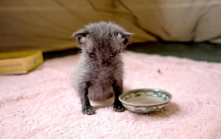 rescued kitten inspires childrens book kind to animals 3