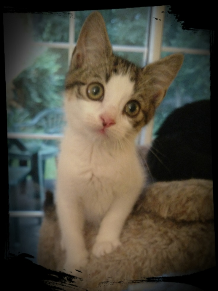 sparkee the kitten who passed FIP