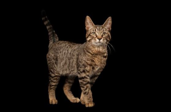 cats domesticated themselves title