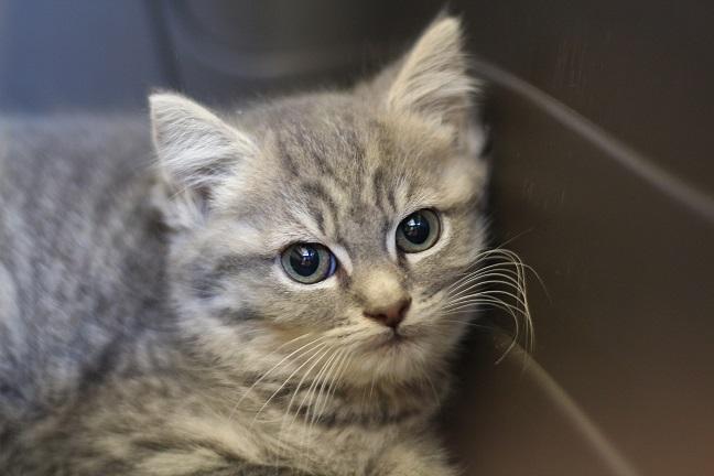 hushpuppy the kitten needs a home