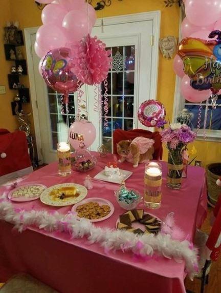 cat quinceanera party 1