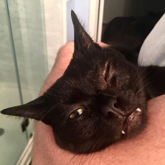 wasnt a cat person until she met vampire cat 3