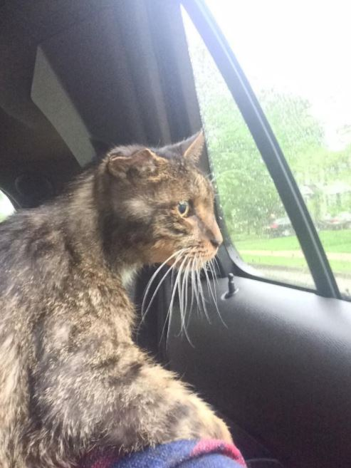 scraggly senior cat finally finds purrfect forever home and family 2
