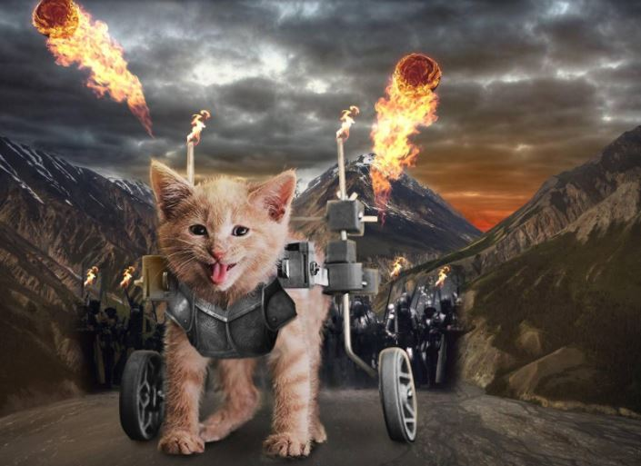 wheelchair happy kitten photoshop 6