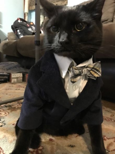 cats in business attire boss 1