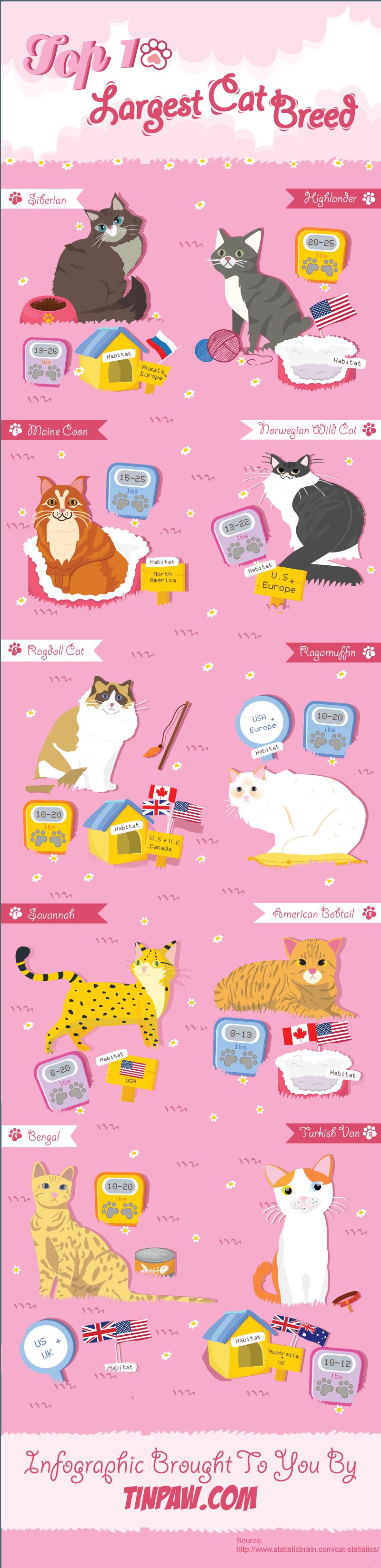 top 10 largest cat breeds