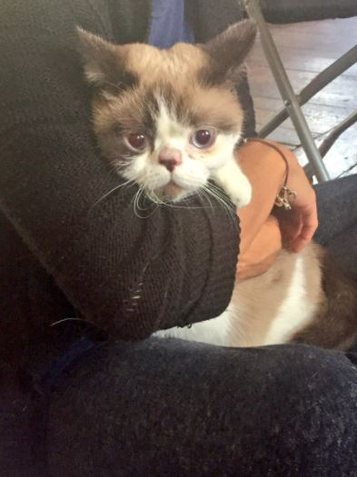 cat comforts victims of london fire
