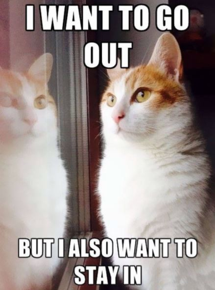 first world cat problems 4
