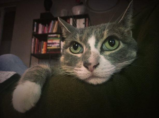 missing jerk cat ad goes viral 2