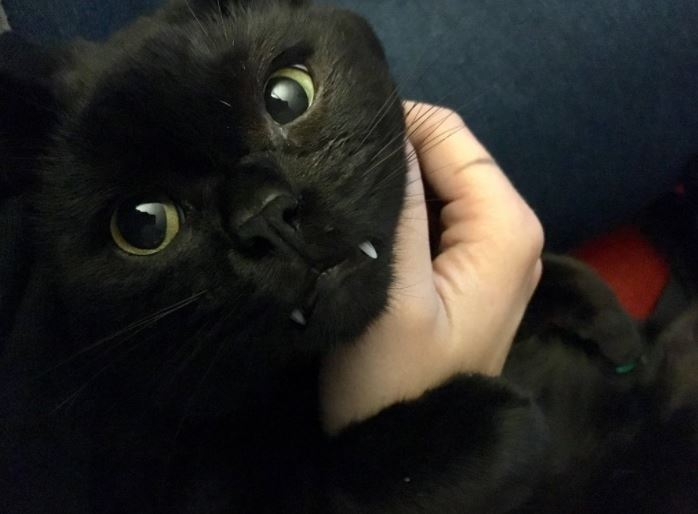 wasnt a cat person until she met this vampire cat
