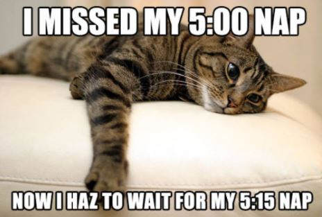 first world cat problems 28