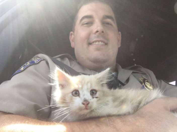 kitten rescued off golden gate bridge 1