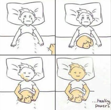 healing powers of cats